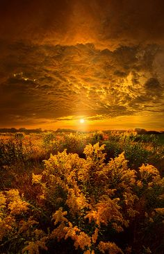 "https://flic.kr/p/oZUFfD | Heavenly Earth | Wisconsin Horizons by Phil Koch. Lives in Milwaukee, Wisconsin, USA. <a href=""http://phil-koch.artistwebsites.com"" rel=""nofollow"">phil-koch.artistwebsites.com</a> <a href=""https://www.facebook.com/MyHorizons"" rel=""nofollow"">www.facebook.com/MyHorizons</a> #photooftheday #picoftheday"