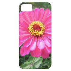 Pretty Pink Zinnia iPhone Case iPhone 5/5S Cases