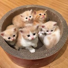 Basket of kittens!
