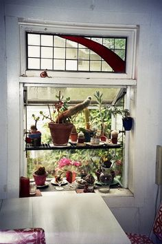 succulent window