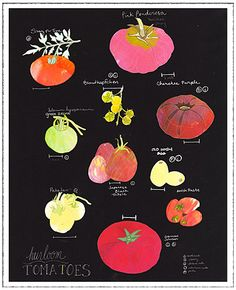 Heirloom Tomato Art Print