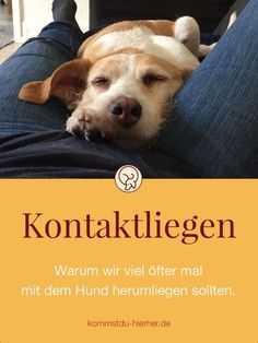 Contact Lying - Kontaktliegen Why we should be in contact with the dog much more often Dogs Baby Dogs, Pet Dogs, Dogs And Puppies, Irish Terrier, Bull Terrier, Terrier Mix, Reptiles, K Om, Dog Collar Tags