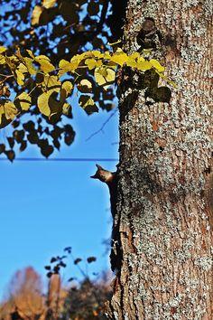 kaverimme orava