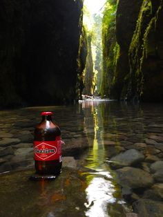 One of the many hidden treasures of the Columbia River Gorge. #sessionlager #oneontafalls