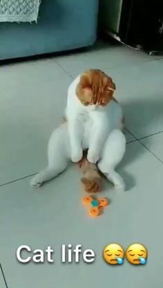 Funny Cat Memes, Funny Cat Videos, Wtf Funny, Chat Funny, Cute Kitten Videos, Funniest Jokes, Cats Humor, Humor Videos, Funny Art