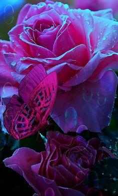Beautiful Flower Drawings, Beautiful Flowers Pictures, Beautiful Flowers Wallpapers, Beautiful Rose Flowers, Beautiful Gif, Flower Pictures, Beautiful Butterflies, Amazing Flowers, Love Flowers