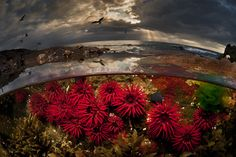 Ces photographies à moitié dans l'eau dévoilent la beauté cachée de l'univers sous-marin