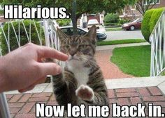 funny cat meme of a cat behind a screen door pawing at a human finger with the caption hilarious now let me back in