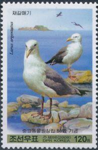 European Herring Gull (Larus argentatus))
