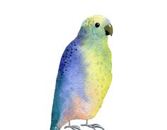 """Check out new work on my @Behance portfolio: """"Watercolor birds"""" http://be.net/gallery/54140697/Watercolor-birds"""