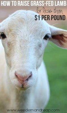 Grass fed sheep. Very good points!