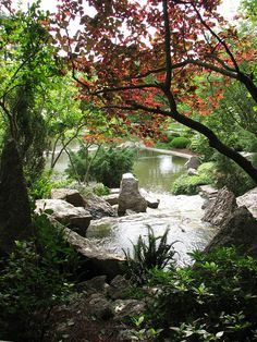 Japanese Garden, Houston... just down the street and simply beautiful! Went here with Lucy :)