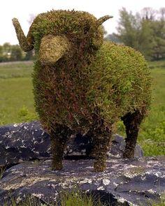 Amaze Pics & Vids: Creative Art works in Plants...