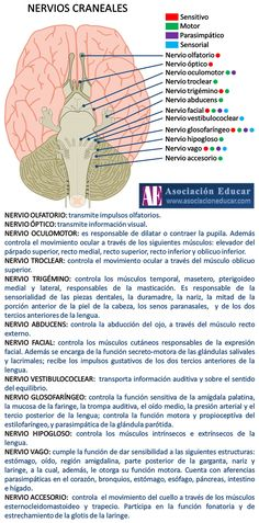 Neurociencias: Nervios craneales.