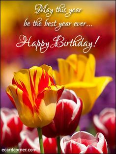 Birthday items on pinterest 71 pins for Flowers for aries woman