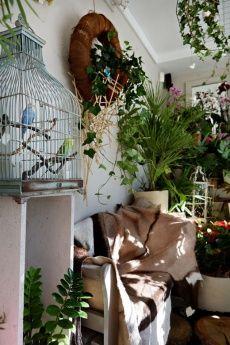 Projekt DŻUNGLA w Kwiaciarni Zielona Gęś.   Jeśli lubicie zieleń, a może chcecie przedłużyć wakacje? Wspaniałe rośliny z Oaza Palmy, babusy, oliwki, palmy ciekawe aranżacje, botanical art, kameleony, papugi... i wiele innych niespodzianek czeka!  fot. Marcin Chruściel