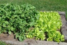 Gardening   - Articles & Resources from Nebraska Extension in Lancaster County