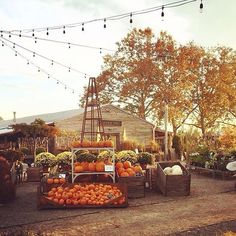 A pumpkin sunset at the store and more harvest beauty from our annual Autumn Bounty Festival, today on The Blog! (link in profile)