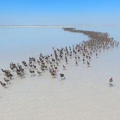 Una colonia di fenicotteri sul lago Salato, nella provincia turca di Aksaray
