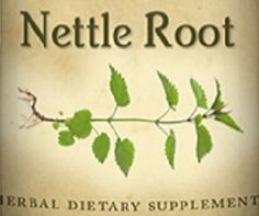 STINGING NETTLE ROOT  Saw Palmetto gets all the attention, but the roots of the common Nettle deserve a place in the spotlight as well, for supporting prostate and lower urinary tract health. NaturalHopeHerbals