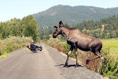 Trail of the Coeur d'Alenes and Hiawatha bike paths in Northern Idaho