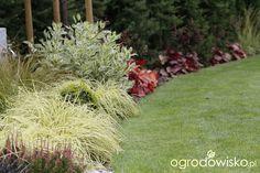 Zimozielony ogród przy białym domu - strona 223 - Forum ogrodnicze - Ogrodowisko