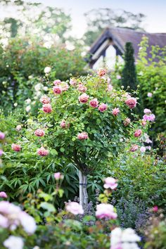 Everything you need to know about roses  - countryliving.co.uk