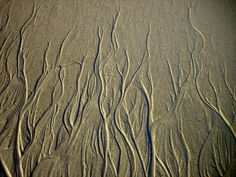 Root-like channels in the sand seen at Point Reyes, California