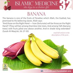 Islamic medicine Benefits of banana according to Hadith #Hadith on #Banana #Islam Fruit of Paradise (Jannah)