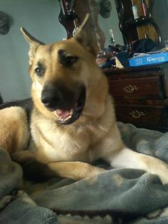 URGENT!!! PLEASE REPIN>>>LOST DOG IN FLORIDA>>> https://www.facebook.com/photo.php?fbid=617186354978982=o.190810155982=1