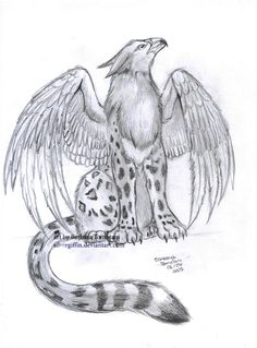 Griffin Drawings | More from ~ silvergriffin