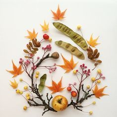 Fall Colors - Bridget Beth Collins - Flora Forager - floraforager.com