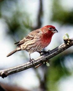 Bird Unit Study At Squidoo