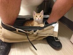 14 animals who have zero respect for you privacy!