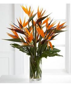 bunch of birds of paradise in clear vase