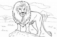 Lion Adult Coloring Pages from Animal Coloring Pages category. Printable coloring pictures for kids you could print and color. Have a look at our selection and printing the coloring pictures for free. Animals Drawing Images, Wild Animals Drawing, Baby Animal Drawings, Lion Coloring Pages, Family Coloring Pages, Mandala Coloring Pages, Free Coloring, Coloring Books, Easy Drawings