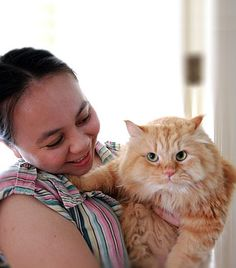 Top Tips on Cat Care For Cat Owners - http://www.catsincare.com/top-tips-on-cat-care-for-cat-owners/