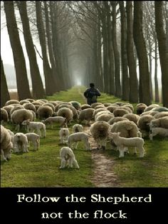 "JESUS CONTINUES TO GUIDE US THROUGH HIS WORD: ""He saw a large crowd, and He felt compassion for them because they were like sheep without a shepherd; and He began to teach them many things,"" Mark 6:34"
