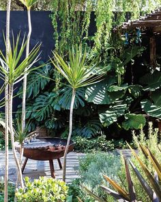 19 Amazing Inspiring ideas For Tropical Landscaping, Modern Landscaping, Tropical Garden, Backyard Landscaping, Green Landscape, Landscape Design, Garden Design, Side Garden, Terrace Garden
