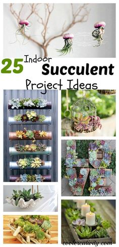 Indoor Vegetable Gardening 25 Indoor Succulent DIY Project Ideas More - Succulents are perfect to grow indoors. 25 Indoor Succulent DIY Project Ideas that you can use to have something beautiful and live to decorate your home. Indoor Succulent Planter, Succulent Wall, Succulent Gardening, Succulent Arrangements, Garden Plants, House Plants, Air Plants, Succulent Containers, Succulent Garden Diy Indoor