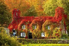 The Tu Hwnt I'r Bont Tearoom in Llanrwst, North Wales, looks simply magical toward the end of October - 2