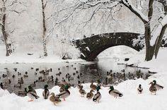 Central Park en pleno invierno