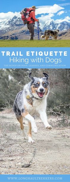 Hiking with Dogs Trail Etiquette Manifesto - Long Haul Trekkers Dog Hiking Gear, Hiking Gear Women, Baby Hiking, Hiking Training, Camping And Hiking, Outdoor Camping, Dog Training, Backpacking With Dogs, Hiking With Dog