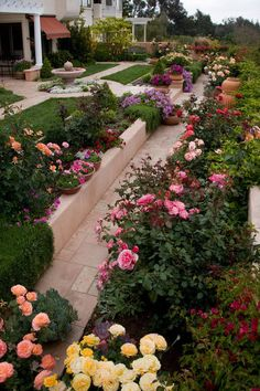 Traditional rose gardens let you show off individual plants while streamlining maintenance — it's easier to deadhead roses or provide essential nutrients and water when every plant in a space has the same care requirements. They're also gorgeous when in full bloom, and they're a featured element in traditional garden design.