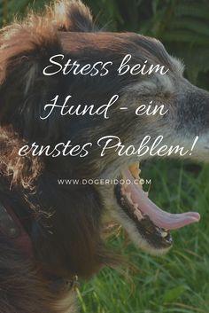 Stress bei Hunden - ein ernst zu nehmendes Problem