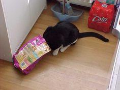 Hé die zak is leeg heb je nog meer brokjes voor me.