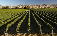 Кроме фьордов, новозеландский Марльборо славится своими винами, в частности, совиньон блан. Это самый крупный винодельческий регион страны, производящий около 19 миллионов ящиков в год.    Ahipara Luxury Travel New Zealand #вина #туры #новаязеландия #совиньон #лучшие #марльборо #гид