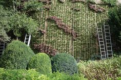 giardino verticale poliflor green garden
