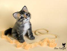 Kitten Njashka by KittenBlackUA.deviantart.com on @deviantART