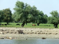 Danube River: Danube River Islands Danube River, River Island, Islands, Golf Courses, Country Roads